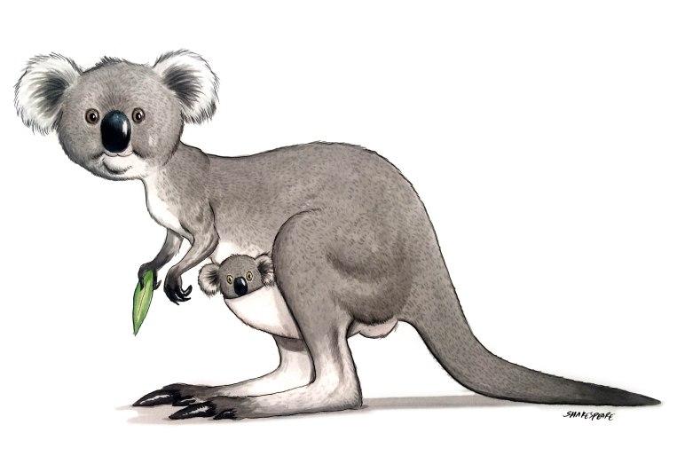 kangoala